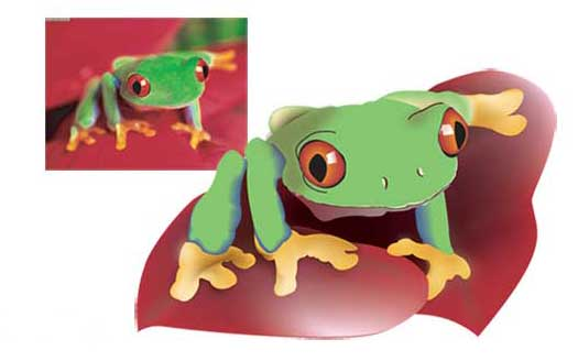 Illustrated Frog